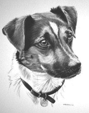 dog portrait, jack russell