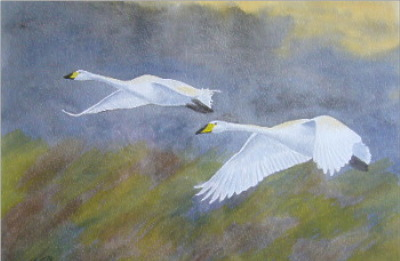 watercolour bewick swans